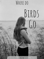 Where do birds go?